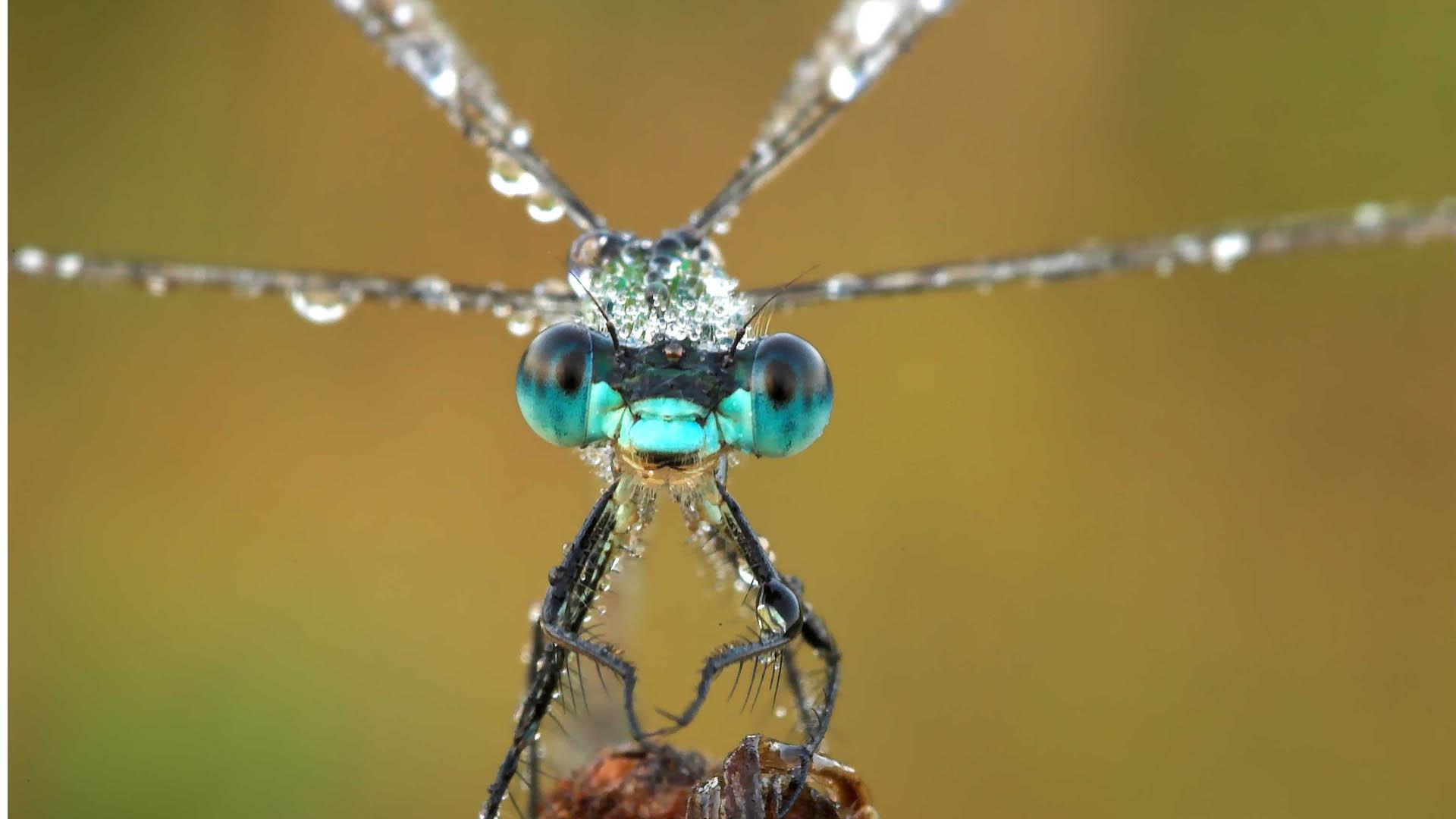 MoorFutures Brandenburg - Klimaschutz Libelle