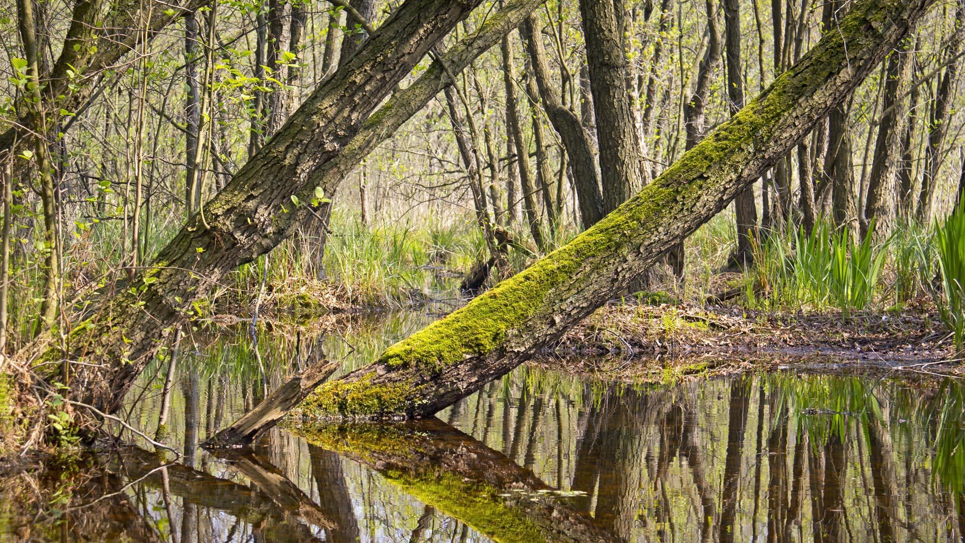 MoorFutures Brandenburg - Meinungen Moorwald