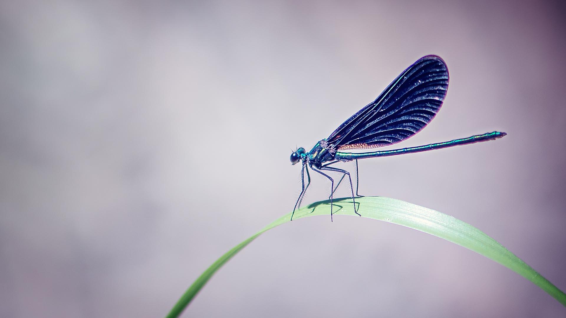 MoorFutures Brandenburg - Meinungen Libelle